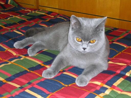 Naše koťátko Edinka již v novém domově