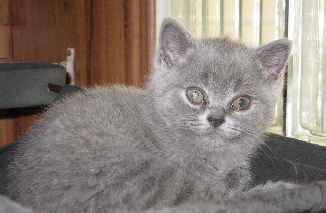 webová stránka šlapky kočička